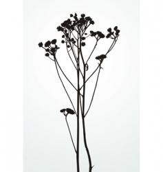 silhouette plants vector image