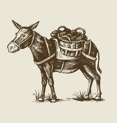 a donkey vector image
