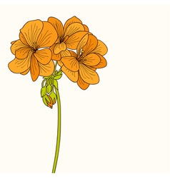 Yellow geranium flower drawing vector