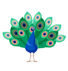 cartoon smiling peacock vector image