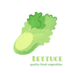 fresh lettuce isolated on white background vector image vector image
