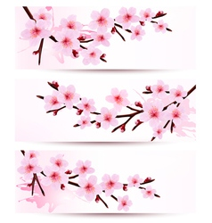 Three spring banners with blossoming sakura vector