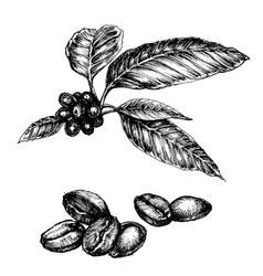 coffee set coffee plant and beans isolated vector image