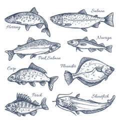 sea fish sketch isolated icons vector image
