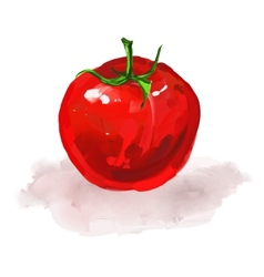 tomato hand drawn painted vector image vector image