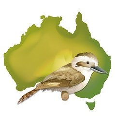 Wild bird in australia vector