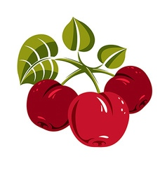 Red simple cherries with green leaves ripe sweet vector