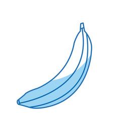Banana fruit sweet vitamins food vector
