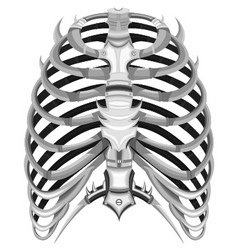 ribs of steel vector image