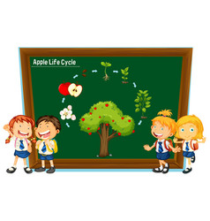 Students and diagram of apple life cycle vector