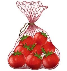 Fresh tomatoes in net bag vector image vector image