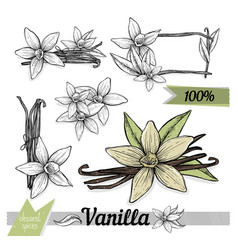 vanilla sticks with flowers on white backgrounds vector image