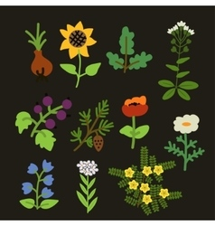 Decorative plants set vector