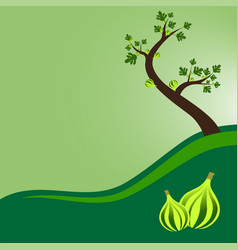 Fig tree with leaves and fruits vector