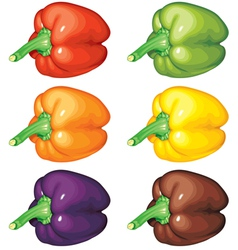 peppers multicolor vector image