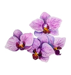 Orchid flower watercolor floral vector