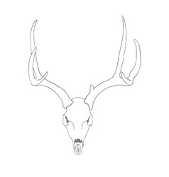 Skull of a deer vector