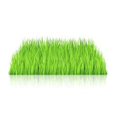 Green Grass vector image