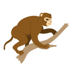 monkey sitting on a branch icon isolated vector image vector image