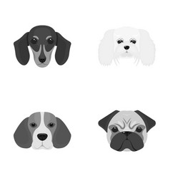 muzzle of different breeds of dogsdog breed of vector image