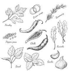 Set of spices in sketch style vector