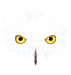 Snowy owl eyes and face vector image