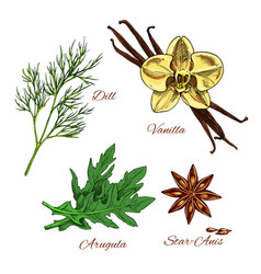 sketch aroma spices and herbs dressing vector image