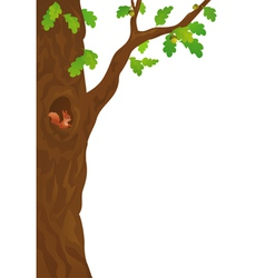 Squirrel in the oak vector