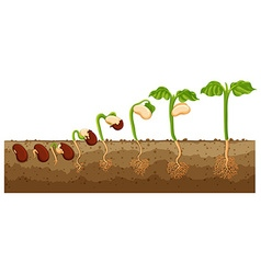 Seed growing into tree vector image