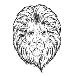 Hand drawn lion head isolated over white vector
