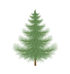 Fluffy green christmas tree to decorate vector