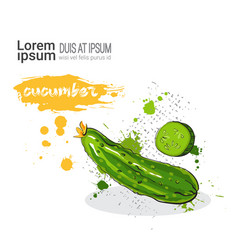 Cucumber hand drawn watercolor vegetables on white vector