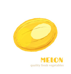 Fresh melon isolated on white background vector