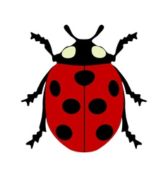 Ladybird isolated vector