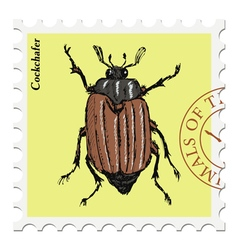 cockchafer vector image