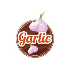 Garlic spice vector
