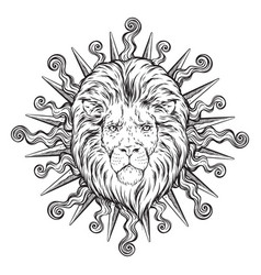 hand drawn lion head in sun rays isolated vector image vector image