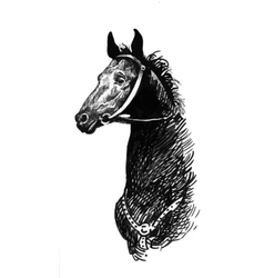 Black ink hand drawn horse vector