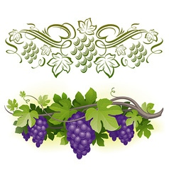 Ripe grapes on the vine vector