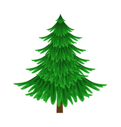 Spruce evergreen tree element of a landscape vector