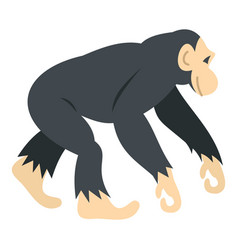 chimpanzee icon isolated vector image