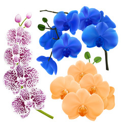 orchid flowers realistic colorful collection vector image