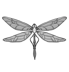 Grey Dragonfly on white background vector image vector image