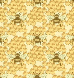Sketch bee and honey cells in vintage style vector