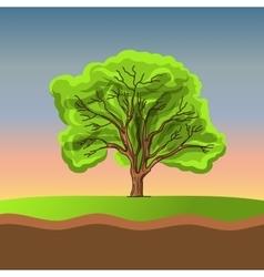 Big tree on sunset vector image