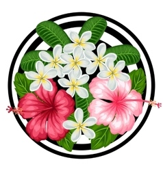 Background with tropical flowers hibiscus and vector