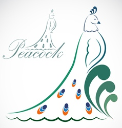 image of an peacock vector image