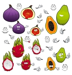 Papaya dragonfruit fig fruits cartoon characters vector image