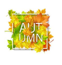 autumn card with red yellow green maple leaves vector image
