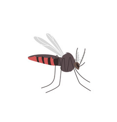 anopheles mosquito zika denge malaria carrier vector image
